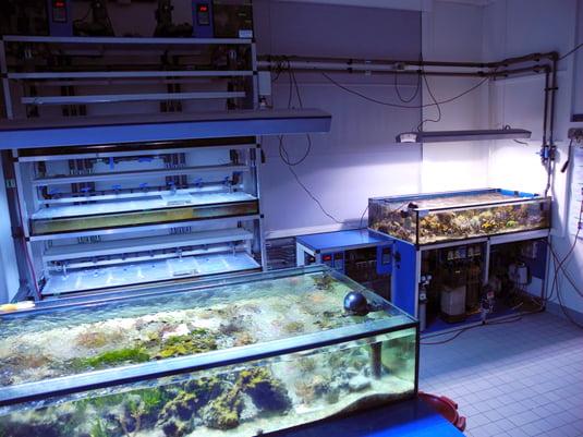 Aquarium Lab Crack + Full Version is also